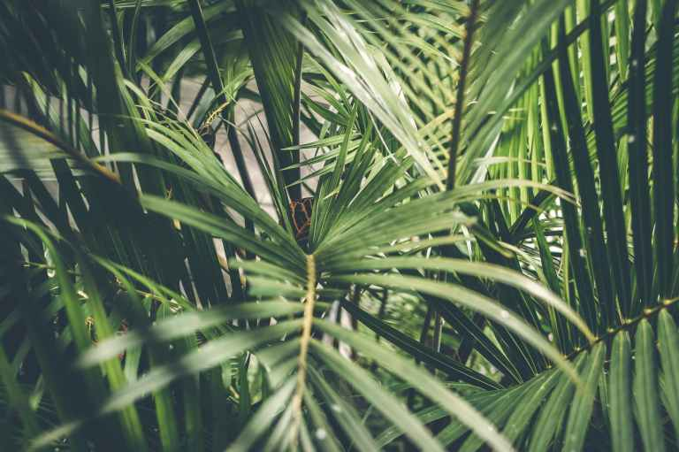 close up photo of palm plant